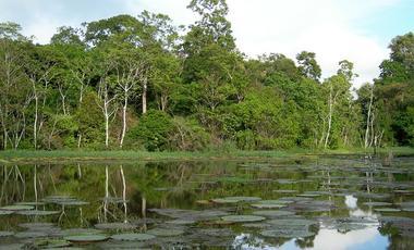 Caribbean,Amazone,Zuid-Amerika